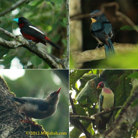 birds of SLRC