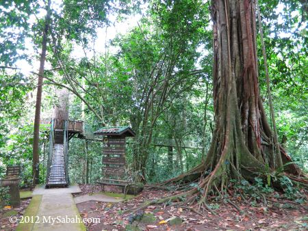 wishing tree in Madai Baturong Nature Center