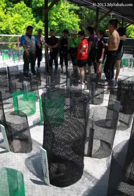 turtle nest in mesh wire