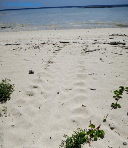 track mark of sea turtle on the sand