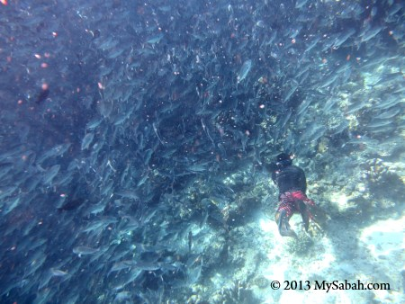 swimming among the fishes