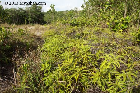 fern and shrubs