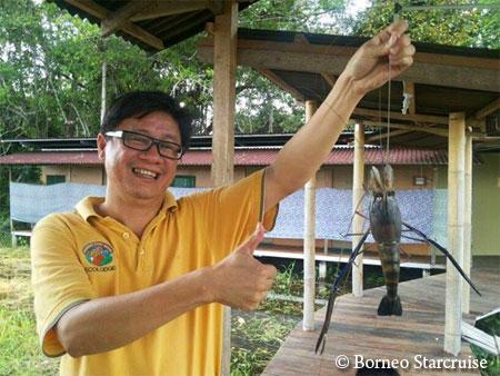 giant freshwater prawn (udang galah)