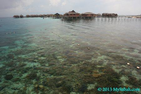 corals near Sipadan Water Village Resort