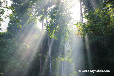 morning rays in rainforest