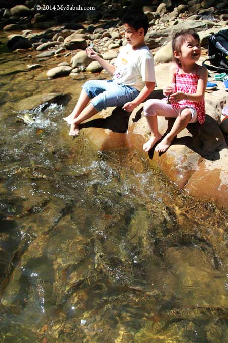 kids feeding fishes