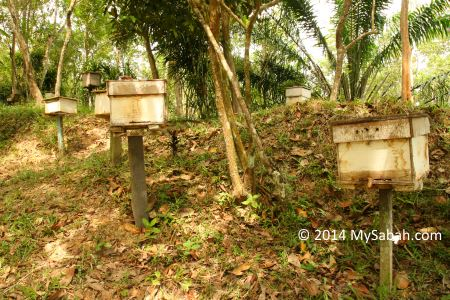 bee hives of Gombizau village
