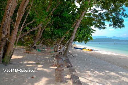 tree shade at the beach of Sepanggar Island