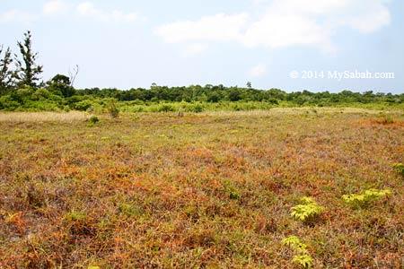 grassland of Mengalum Island