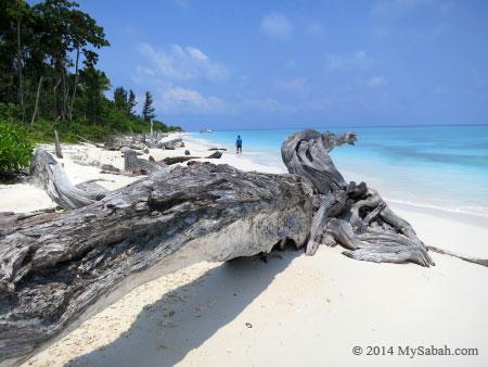 drift wood on the beach