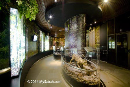 rainforest section of Natural History Gallery
