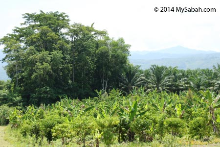 forest and plantation