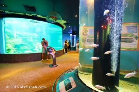 visitors in UMS Aquarium