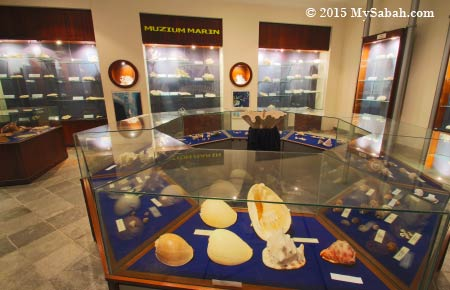 hard corals and seashells exhibition