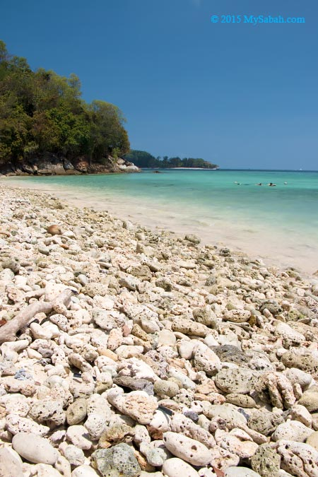 beach covered with coral fragments
