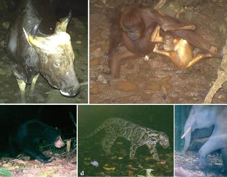 wildlife captured on camera trap