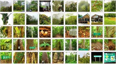 more photos of Deramakot Forest Reserve