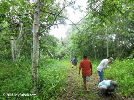 tree replanting area
