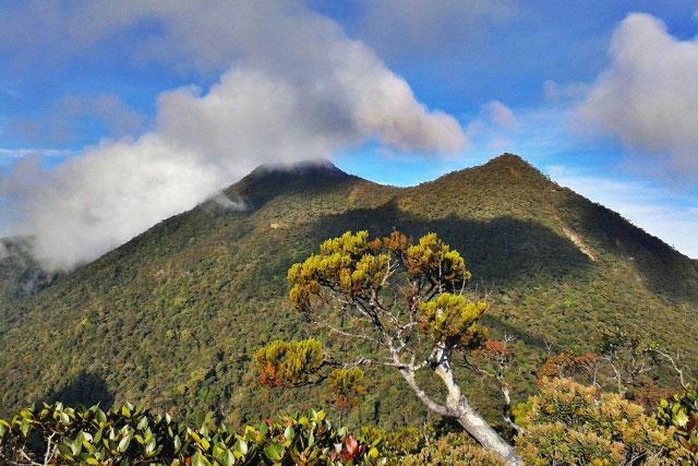 Guide to Climbing Mt. Trusmadi (Mt. Trus Madi)