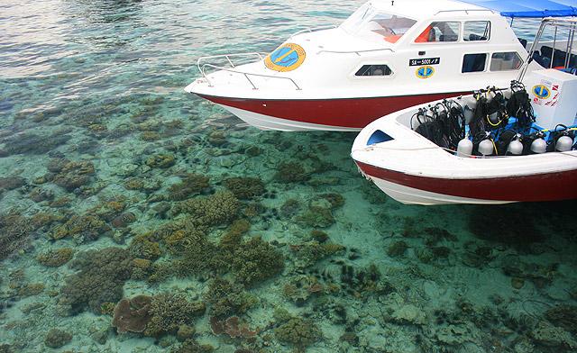 Corals in Mabul island