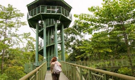 Rainforest Discovery Center (RDC)