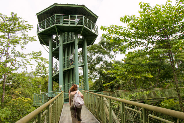 Rainforest Discovery Center (RDC), Sandakan