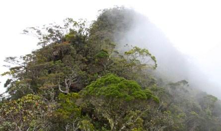 Mt. Trus Madi