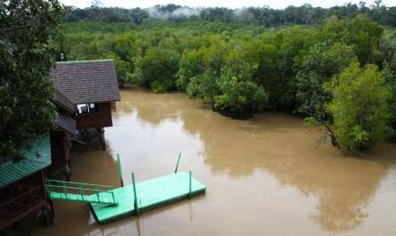 Sepilok Laut Mangrove