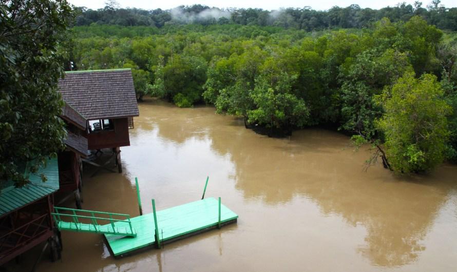 Sepilok Rainforest to Mangrove (part 1 of 4)