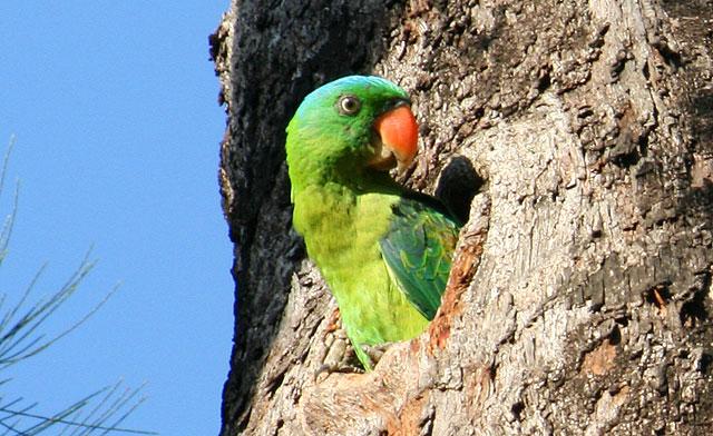 Birdwatching in Sabah