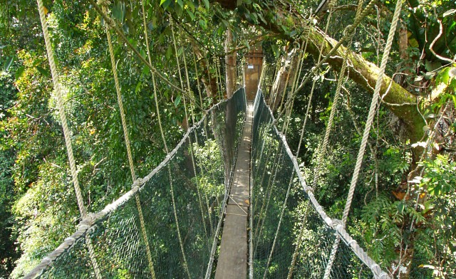 Poring Canopy Walkway, the highest in Sabah