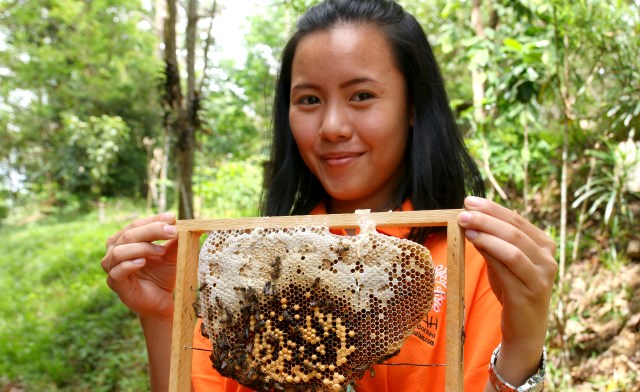Kampung Gombizau, Honey Bee Village of Sabah Borneo