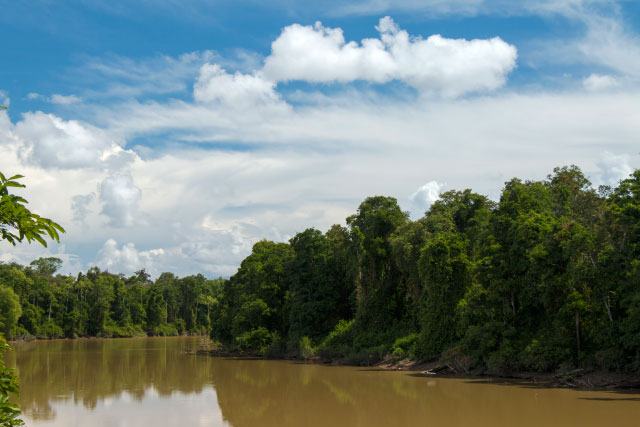 Oxbow Lake and Tanjung Bulat Jungle Camp