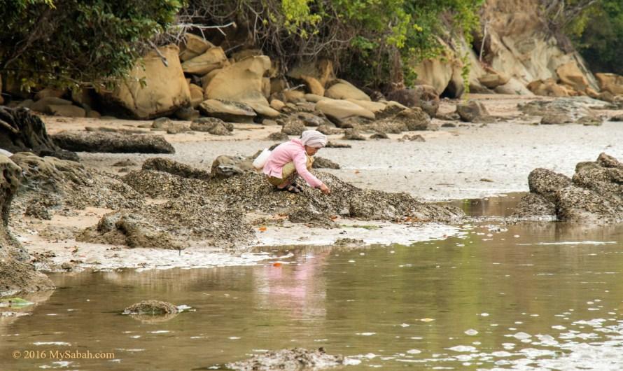 Loro Kecil Beach, little embayment of Kudat