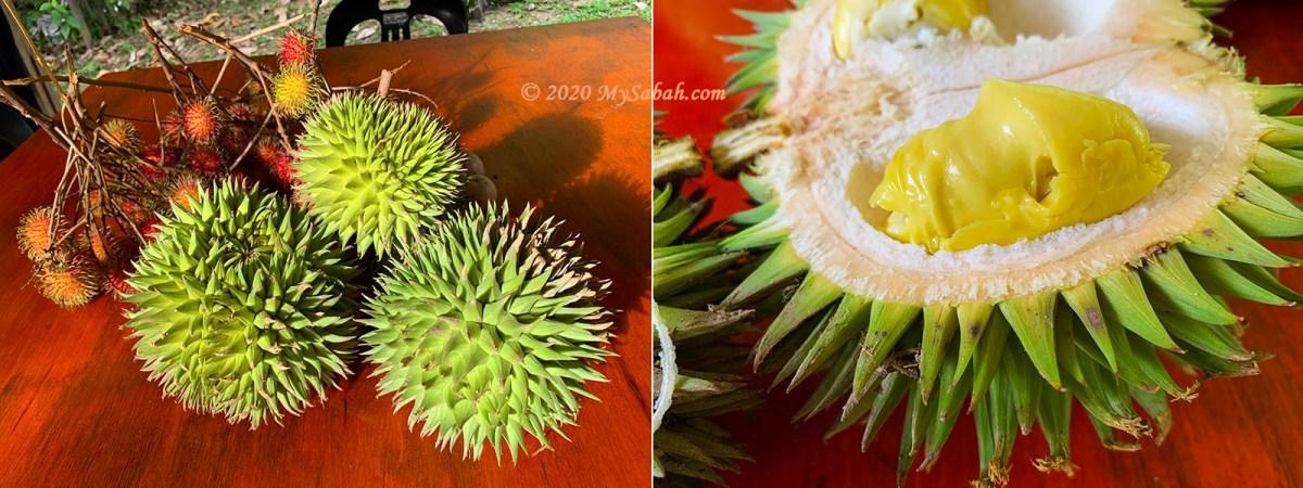 Rambutan fruit and Sukang durian
