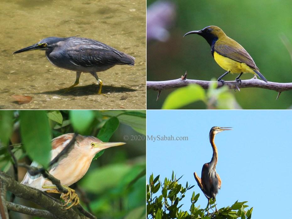 Resident birds at Tempasuk Plains