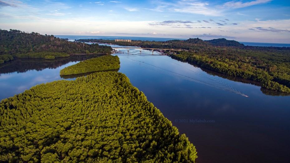 Large area of mangrove trees in Mengkabong River
