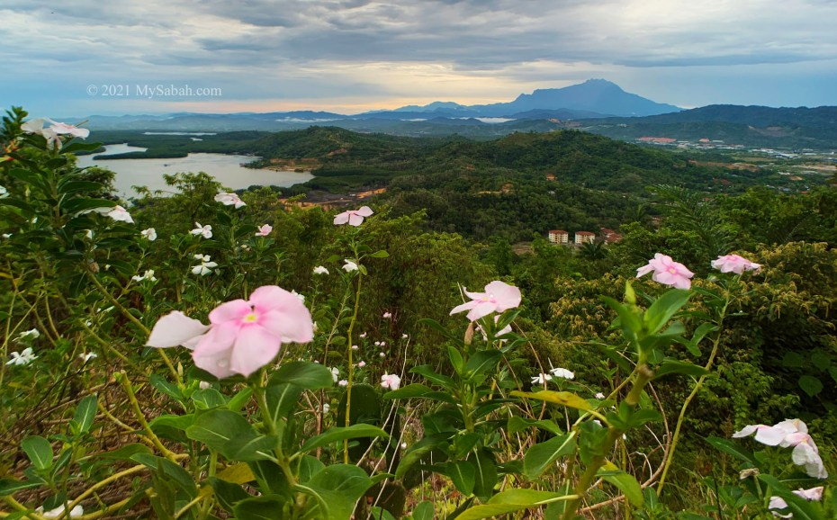 Mount Kinabalu with flowers in front ground