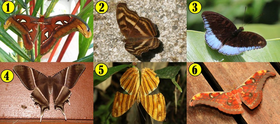 Quiz: Moths vs Butterflies