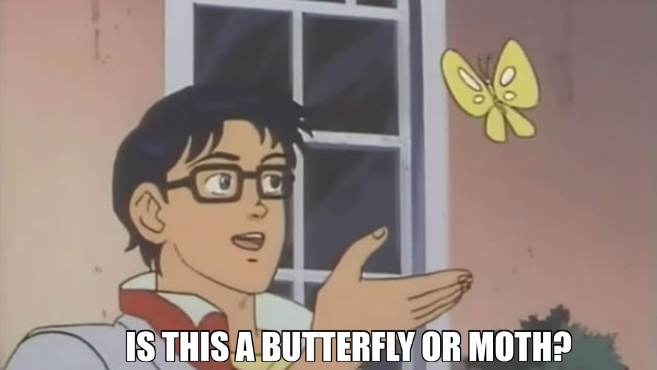 Butterfly meme: Is this a butterfly or moth?