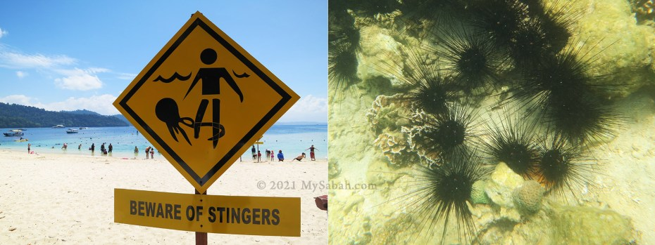 Left: Warning sign on jellyfish; Right: Sea urchins