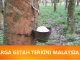 Harga Getah Terkini Malaysia
