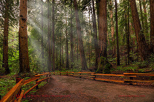 Muir Woods,beach,wedding,venues