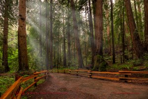 Muir, Woods, Wedding