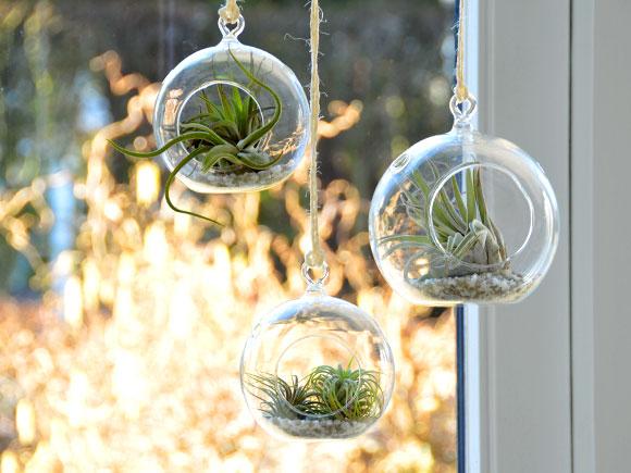 Video Hangend tuintje met luchtplantjes  My Simply Special