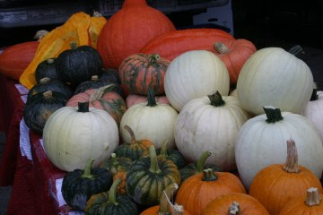 In the company of pumpkins