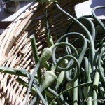 Garlic scapes at the Farmer's market