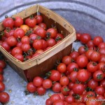 Cherry tomatoes on the loose at the Farmer's market