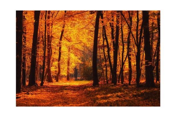 Autumn Glow Canvas art