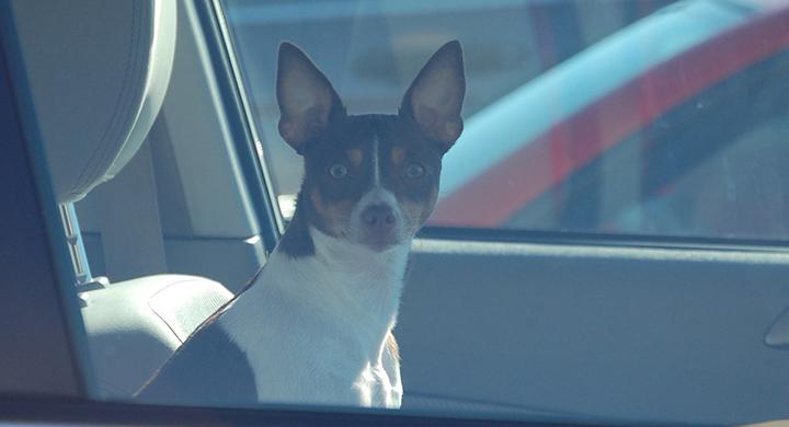 dog in car_1554928350598.jpg.jpg
